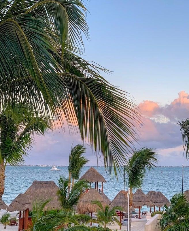 beach view mexico palm trees