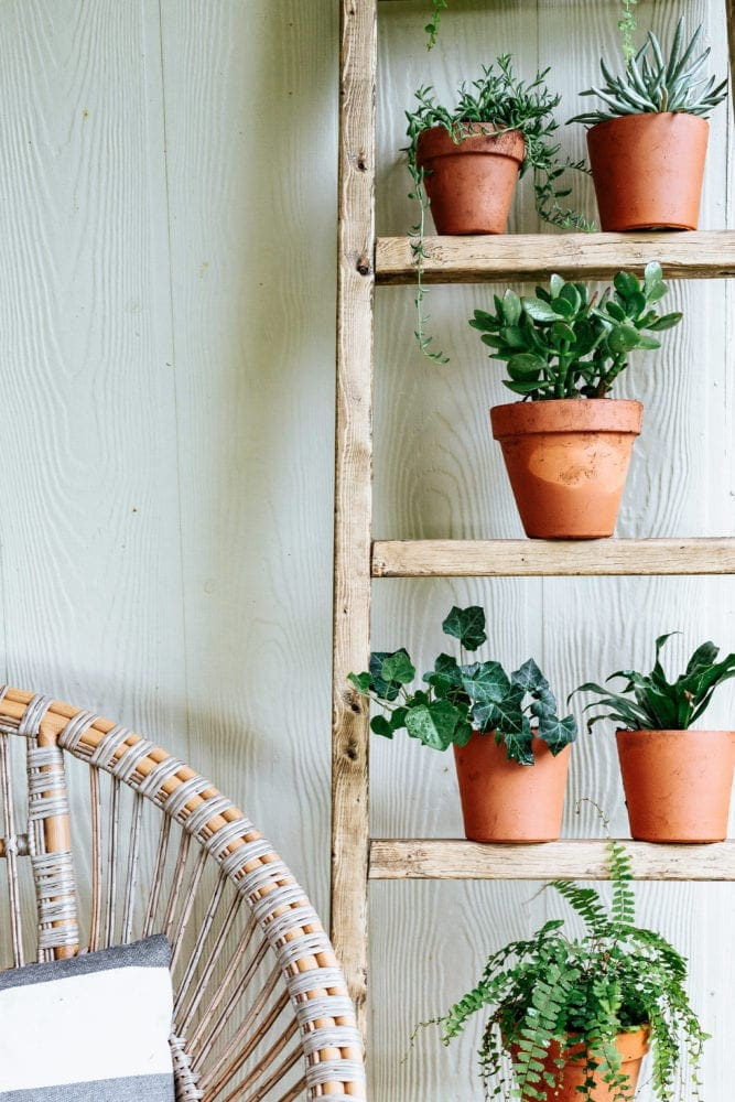 close up of plant ladder