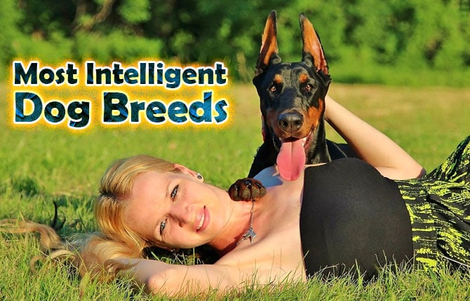 Photo of Most Intelligent Dog Breeds