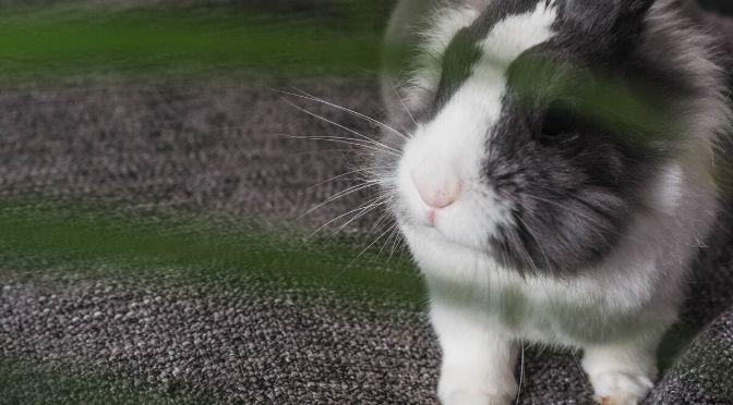 rabbit on blanket