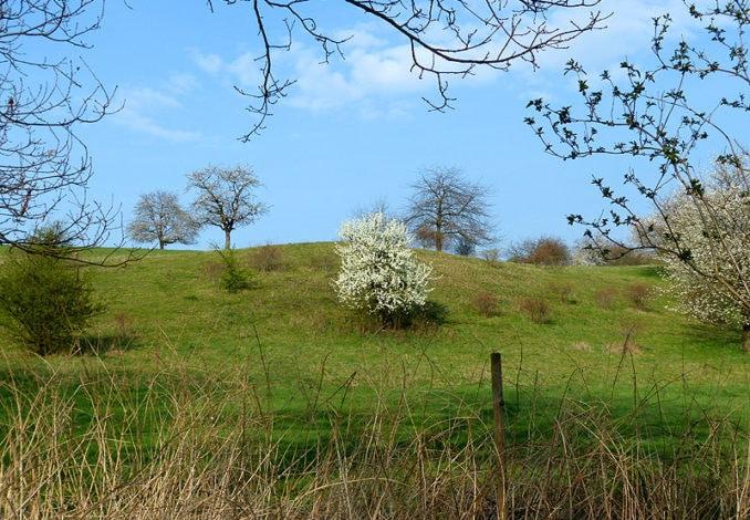 Naturdenkmal Freital