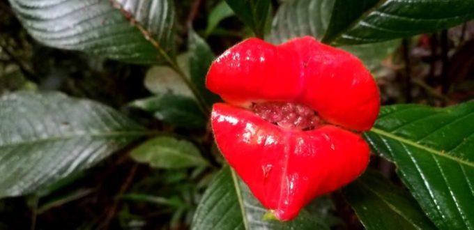 Best Ecuador Wildflowers Tours