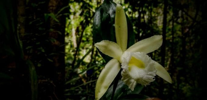 Learn more about the Orchids of Ecuador