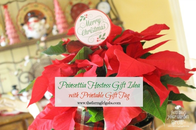 Poinsettia Care And Hostess Gift Idea