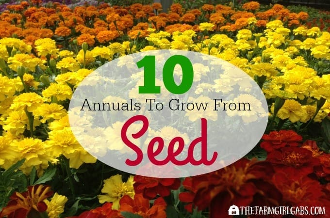 10 Annuals To Grow From Seed
