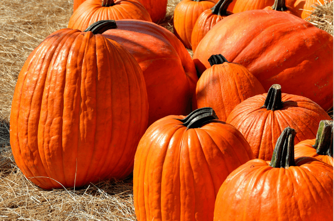 Are you a fan of all things pumpkin? Fall is here and I am excited to start baking pumpkin recipes. Today I am sharing some simple tips for Cooking With Pumpkin.