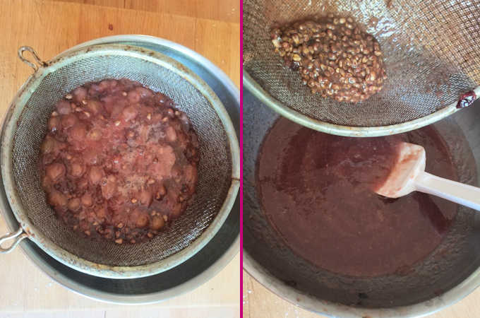concord grape pulp straining out the seeds