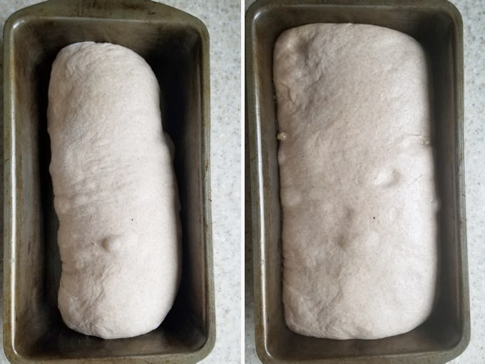 two photos showing whole wheat sourdough bread before and after rising in a loaf pan