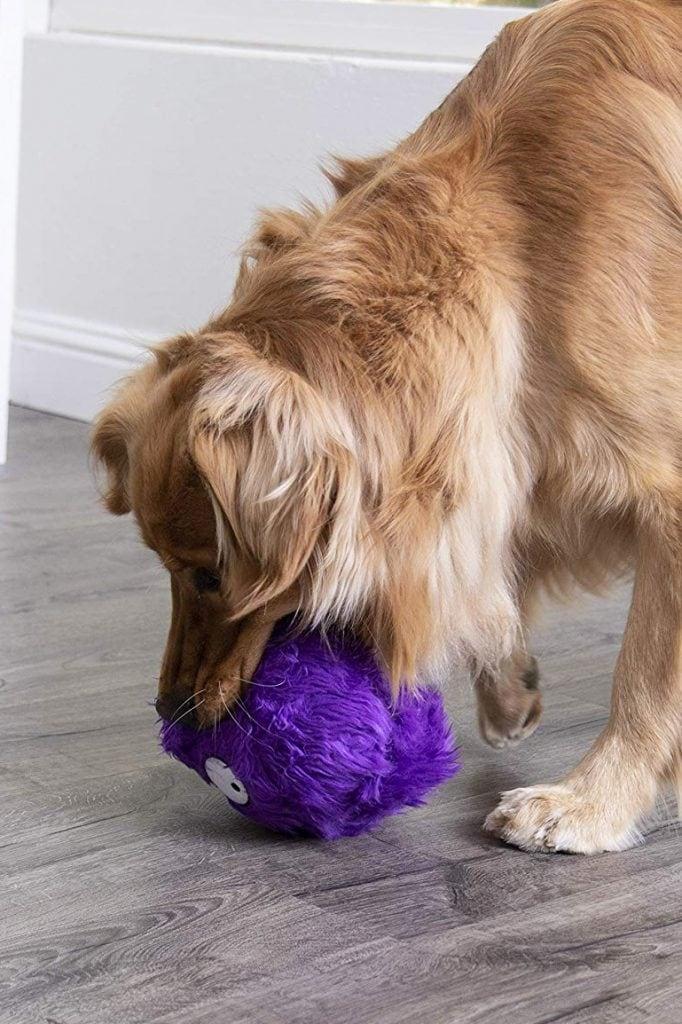 How To FurBallz Like Dexter Dog