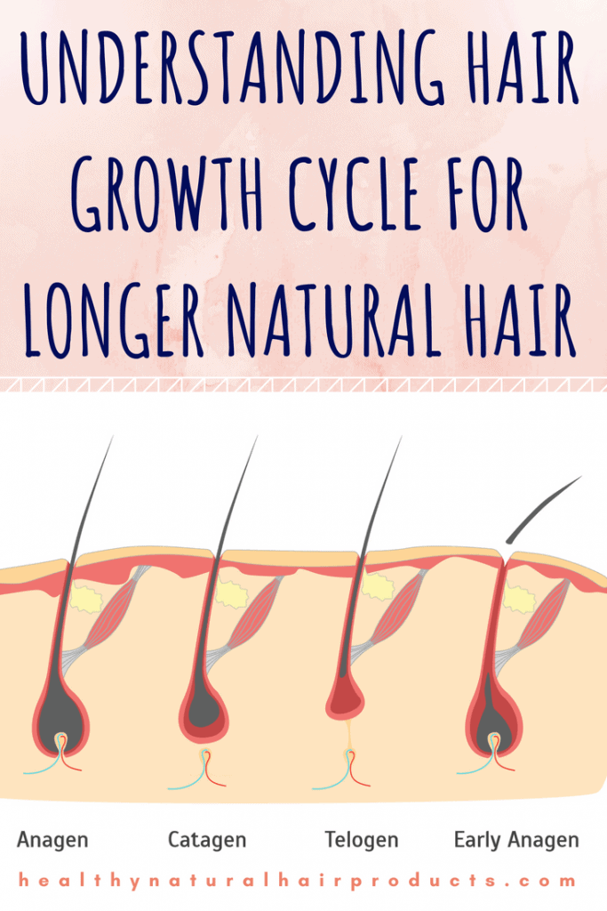 Understanding hair growth cycle for longer natural hair