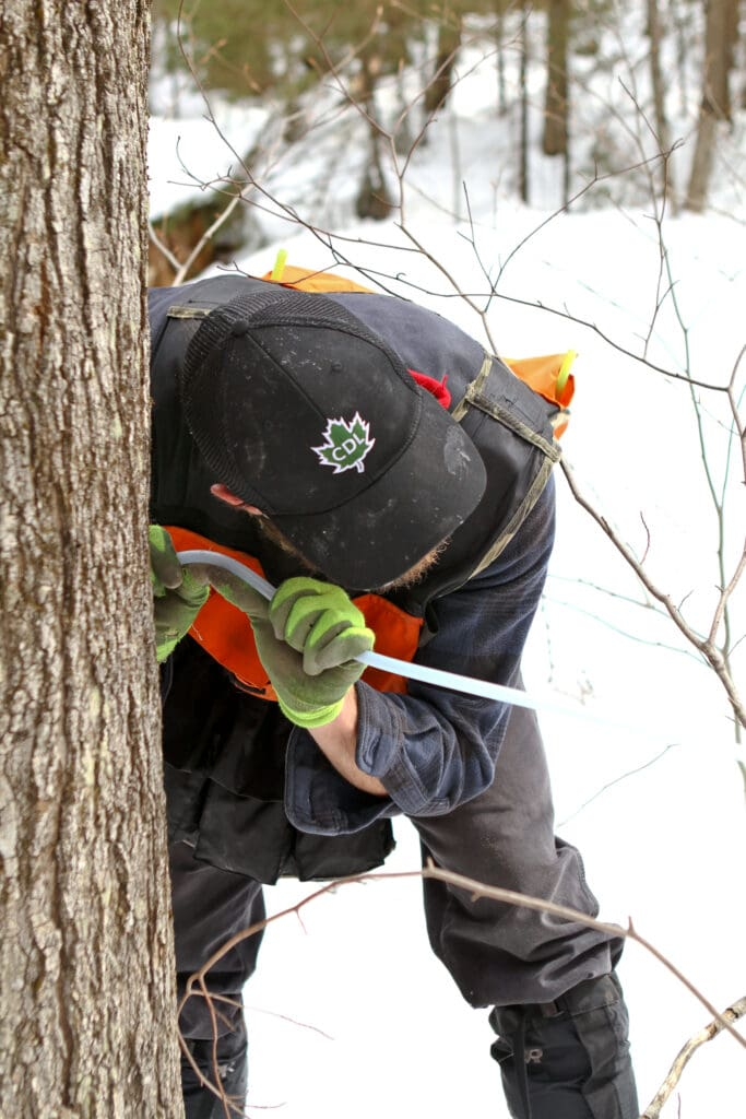 The Steps of Maple Syrup Production