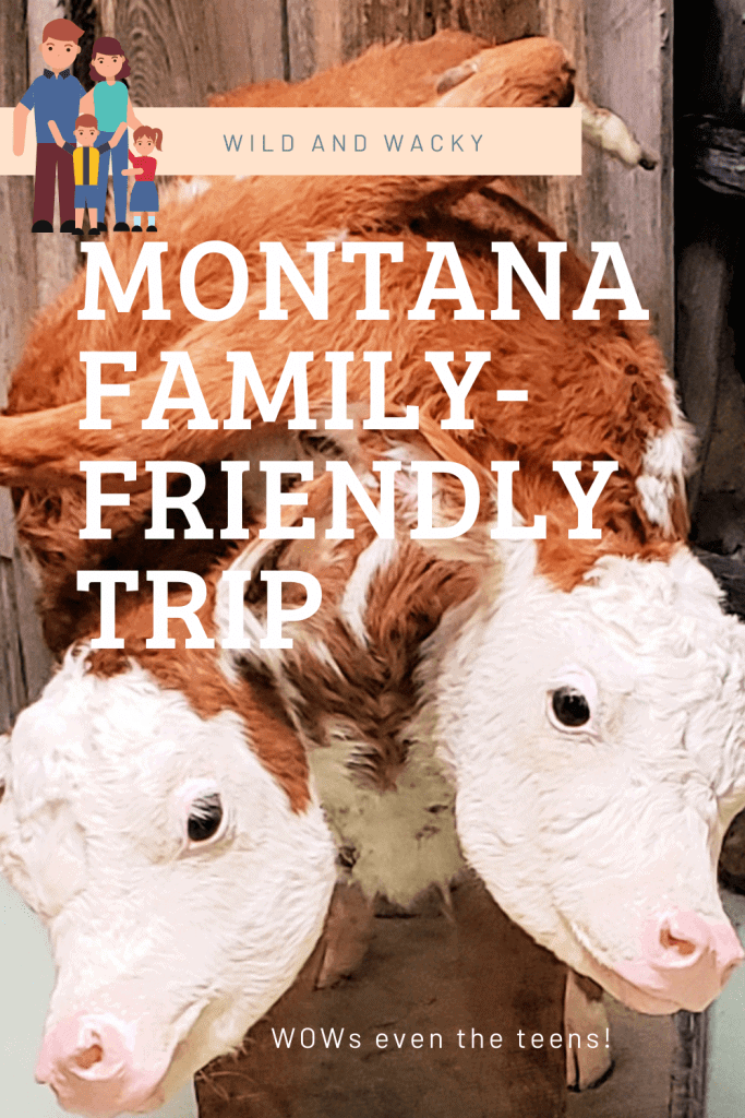 """Pinterest pin that says """"wild and wacky Montana family-friendly trip"""" with photo of 2-headed calf"""