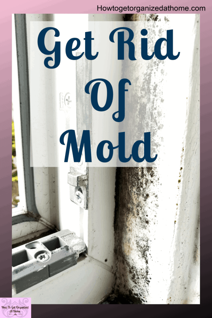 Do you want to know how to get rid of mold on your windows? Some products make it appear like it's gone but it will come back. Find out what these products are in this article. #mold #mould #moldy
