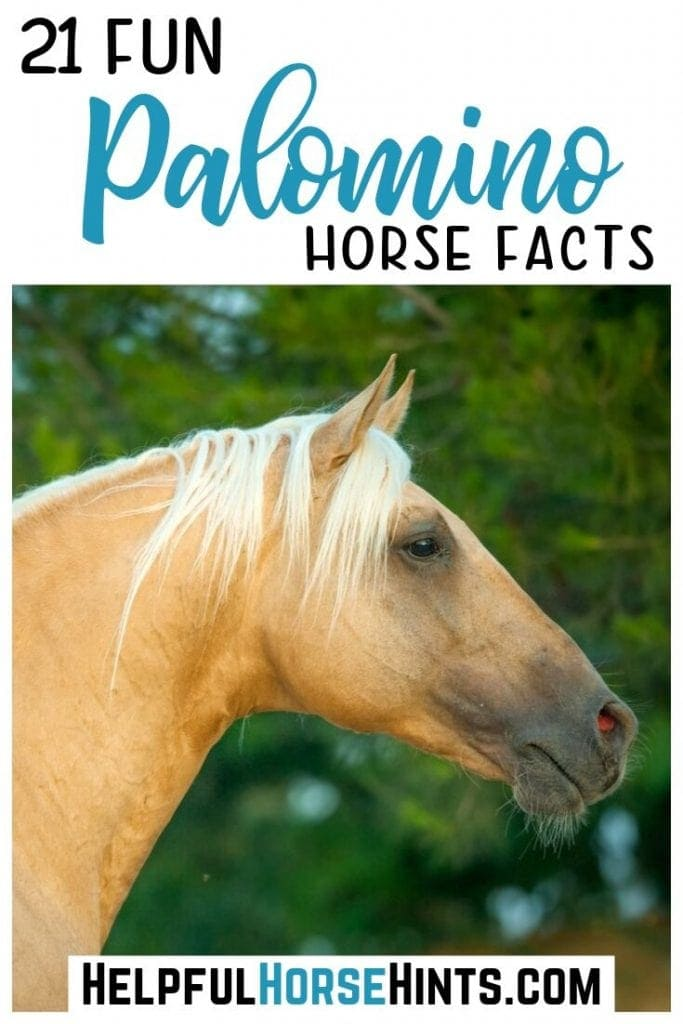 palomino horse in pinterest pinable image