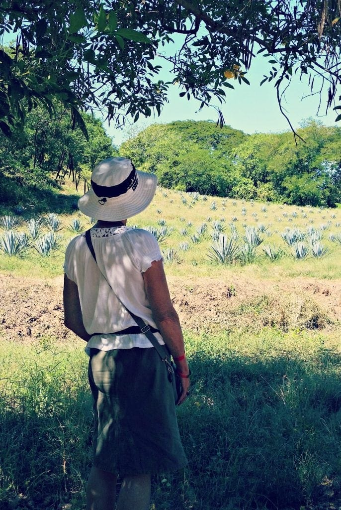 Author stands with back to photo looking at field planted with knee-towaist-high blue agave plants - for National Tequila-Day