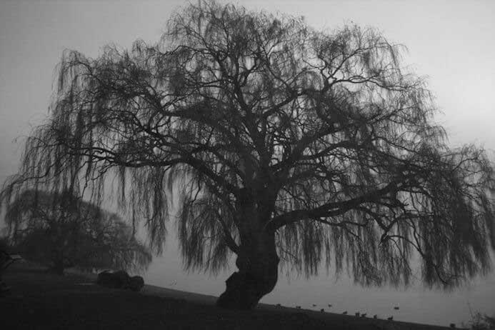 photography portfolio tips - tanaka lake tree New Zealand