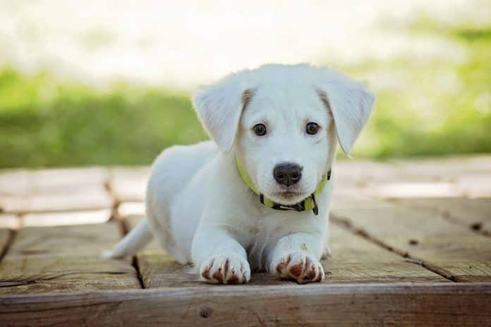 Cani piccola taglia da adottare