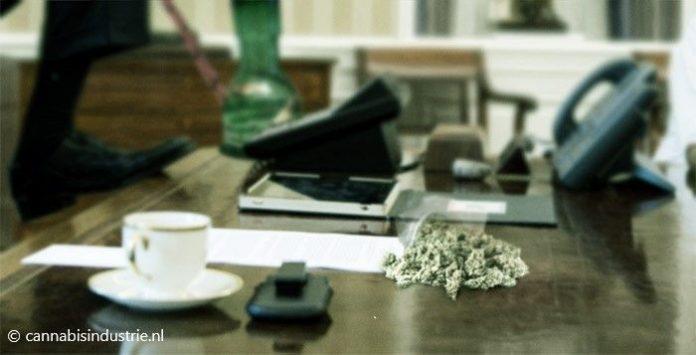 cannabis ondernemer