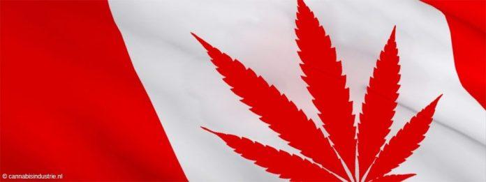 cannabis aandelen canada medicinale cannabis studie high tide british columbia legale cannabis winkels Village Farms Pure Sunfarms inheemse cannabisindustrie diversiteit