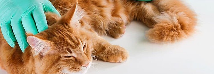 How To Choose The Best Diet For Your Diabetic Cat