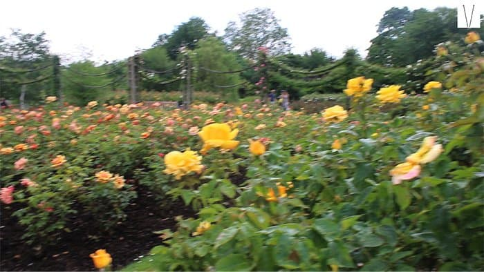queens mary rose gardens
