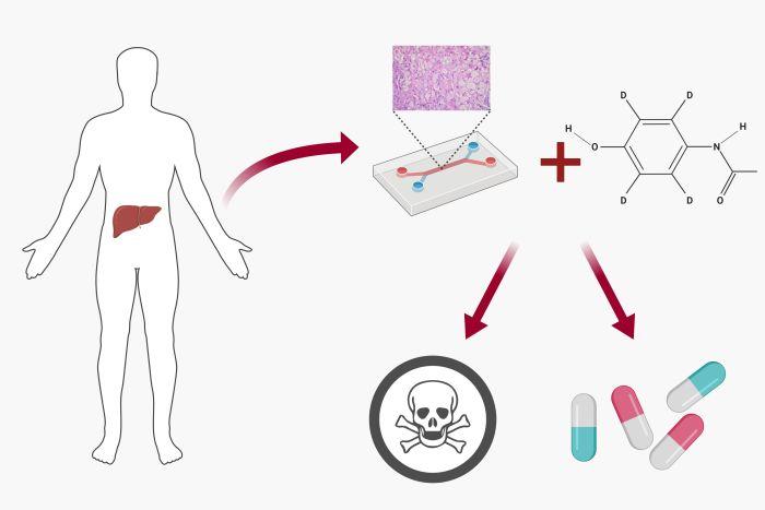 microfluidic drug toxicity screening schematic