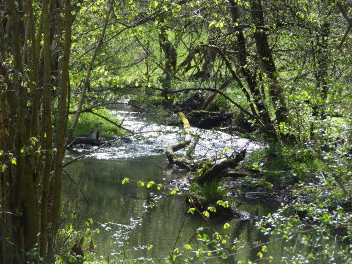 Natürlicher Bach mit Ufergehölzenn