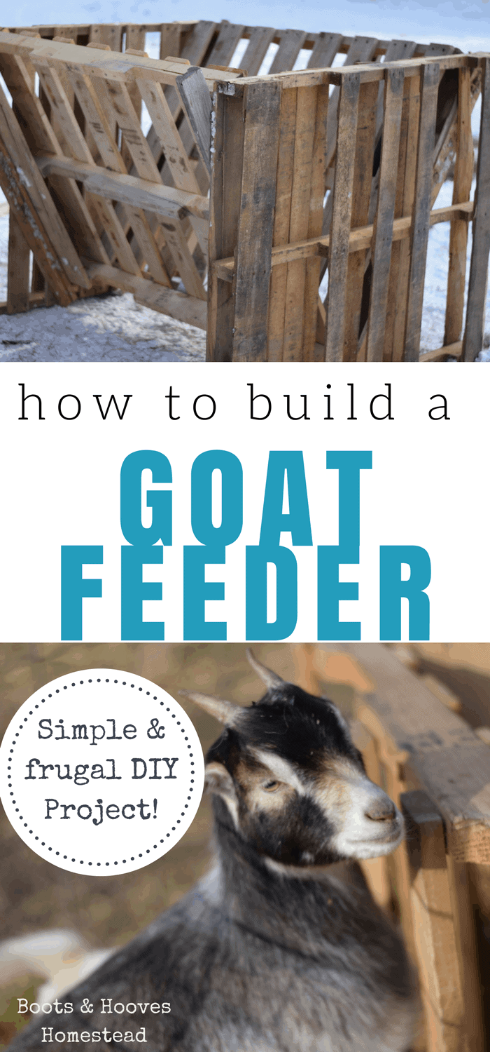 collage of two images. One of the completed goat feeder and the bottom image of a baby goat standing next to the goat feeder.