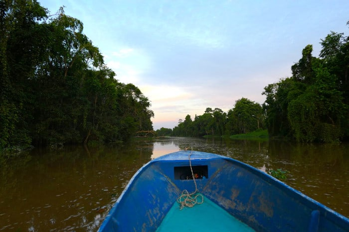 Gorgeous views from our boat on the Kinabatangan River.