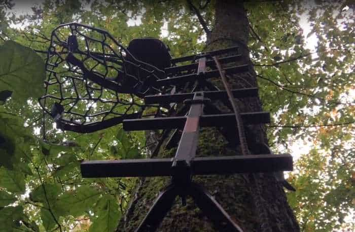 View up to a tree-stand with climbing sticks