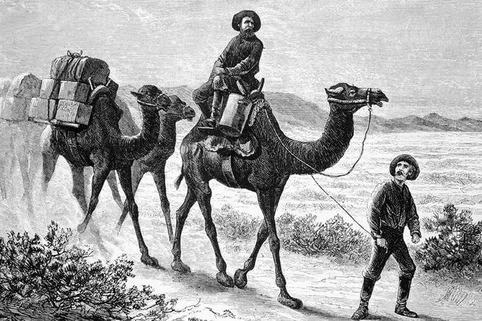 Black and white etching of man leading string of pack camels. Another man rides on top of the first camel.