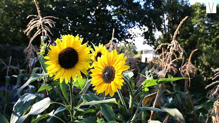 jardim da fenton house