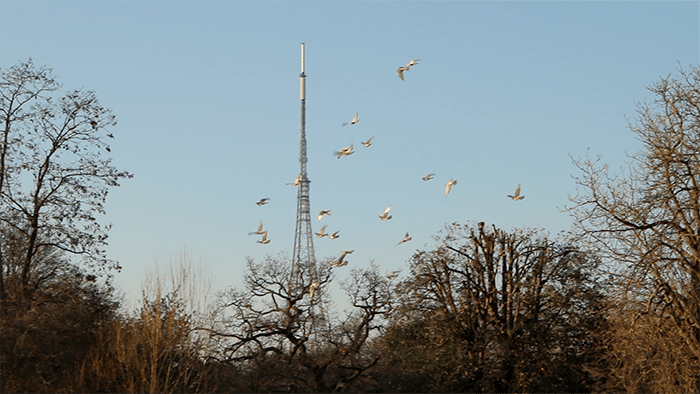 Crystal Palace Park