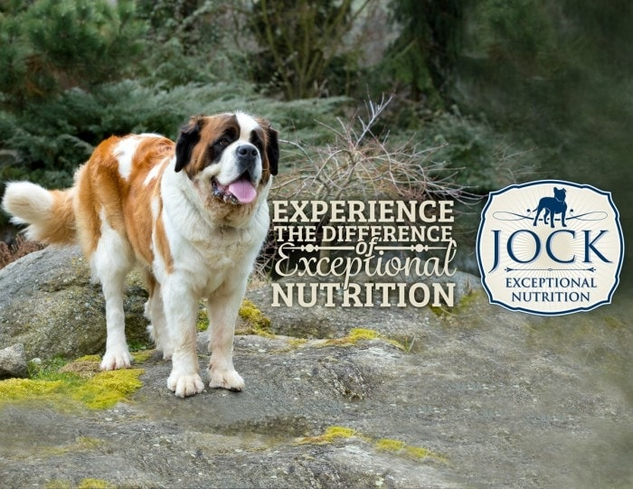 Know Your Breed - Saint Bernard - JOCK Dog Food