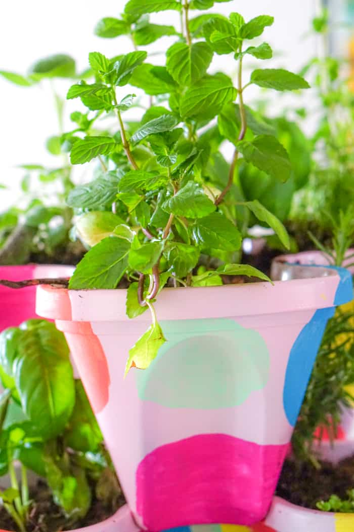 Kids and growing your own herbs. Colorful DIY Indoor herb garden. Looking for a colorful diy herb garden then look no further than this herb garden kit that we're sprucing up.