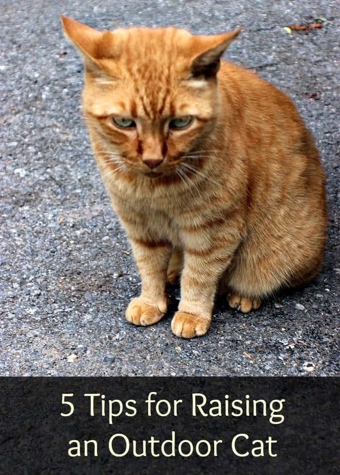 5 Tips for Raising an Outdoor Cat