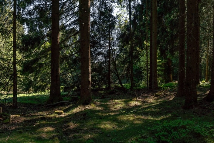 der Thueringer Wald in der Nähe Bhf. Rennsteig