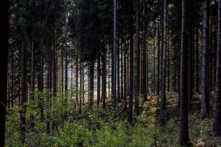 der Thüringer Wald in den frühen Abendstunden bei Meyersgrund, Canon EOS R & Sigma Art 50mm