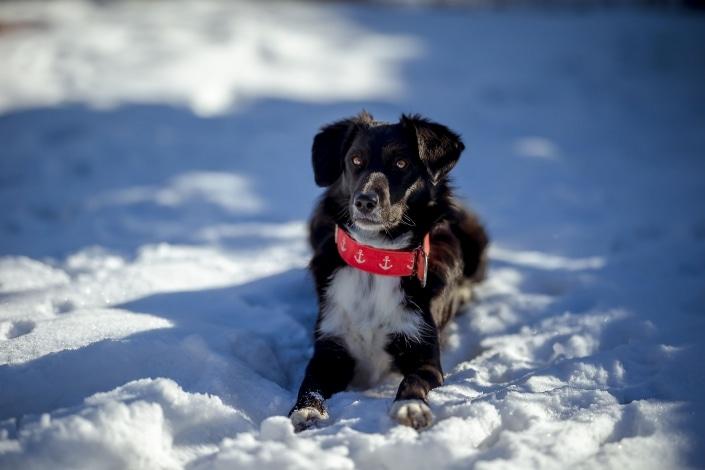 tolle Kontraste, schwarzer Hund bei Sonnenschein im Schnee eingefangen mit der Canon EOSR6 und dem RF 85mm f/1.2L USM bei Blende 1.2