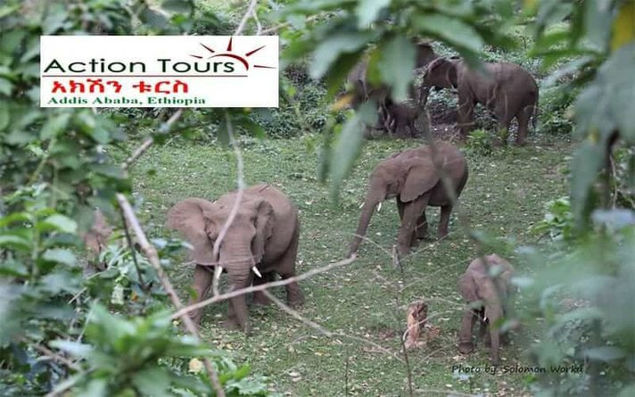 Visit Chebera Churchura National Park, Maze National Park, Omo Valley Tribes, Mago Park , Omo National Park