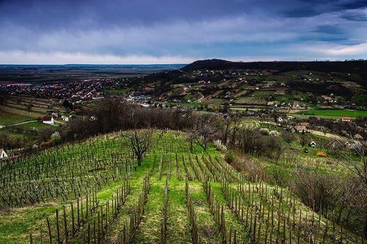 Vackra Szekszárd – läs mer om vinet Elsie's ursprung