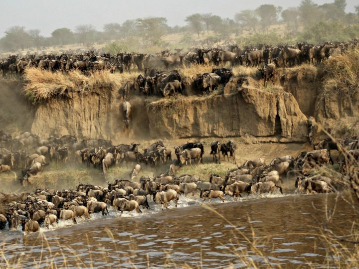 Witnessing East Africa's Great Migration