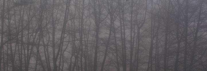 Schamanismus und Natur - Nebelwaldstreifen