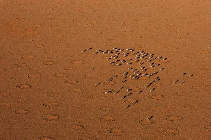 Image: a herd in the orange sands