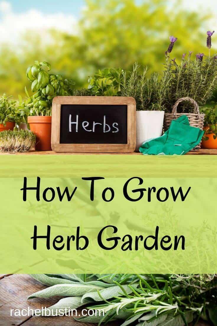 How To Grow a Herb Garden