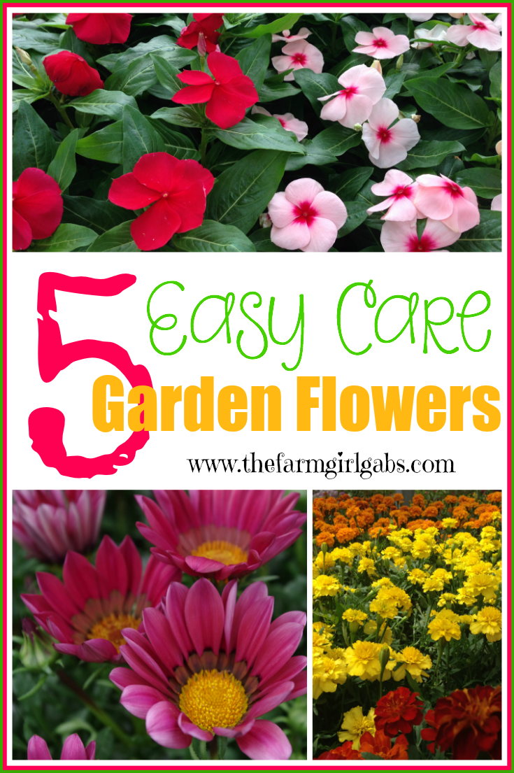 5 Easy Care flowers that your can plant in your garden. #Gardening #Flowers #Plants