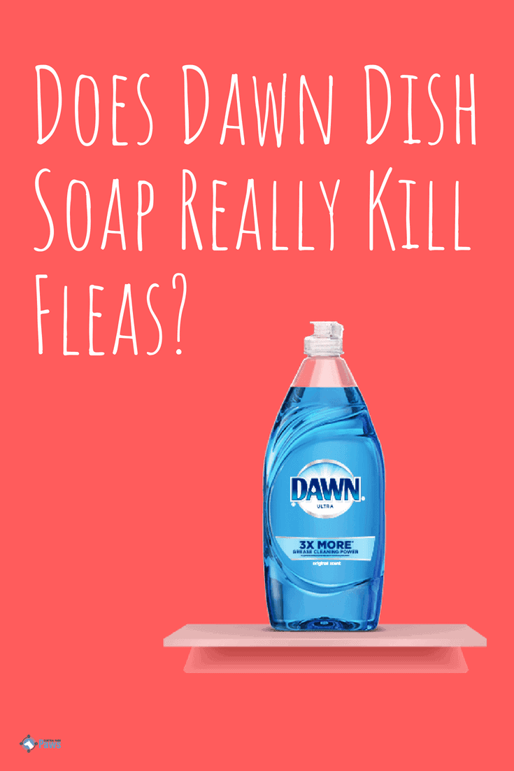 Does Dawn Dish Soap Really Kill Fleas on dogs - Pinterest