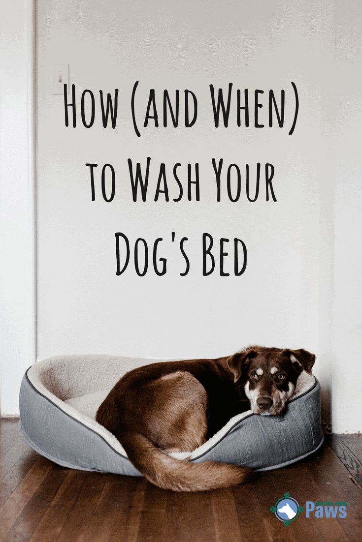 How (and When) to Wash Your Dog's Bed