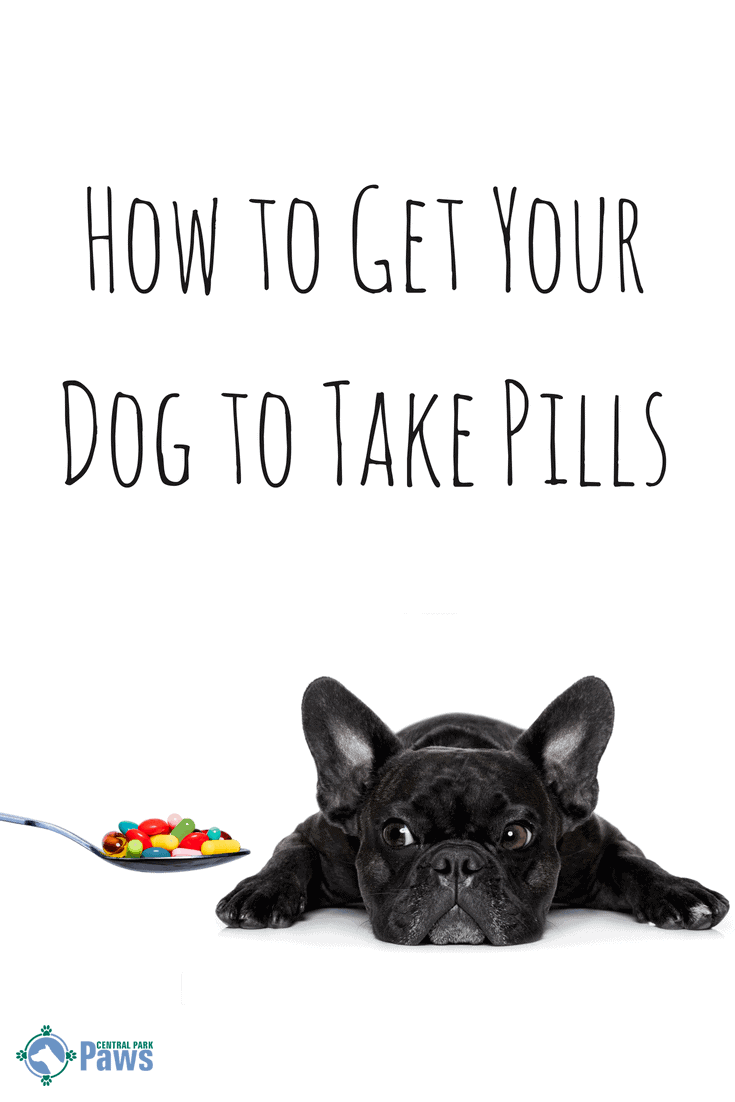 How to Get Your Dog to Take His Pills