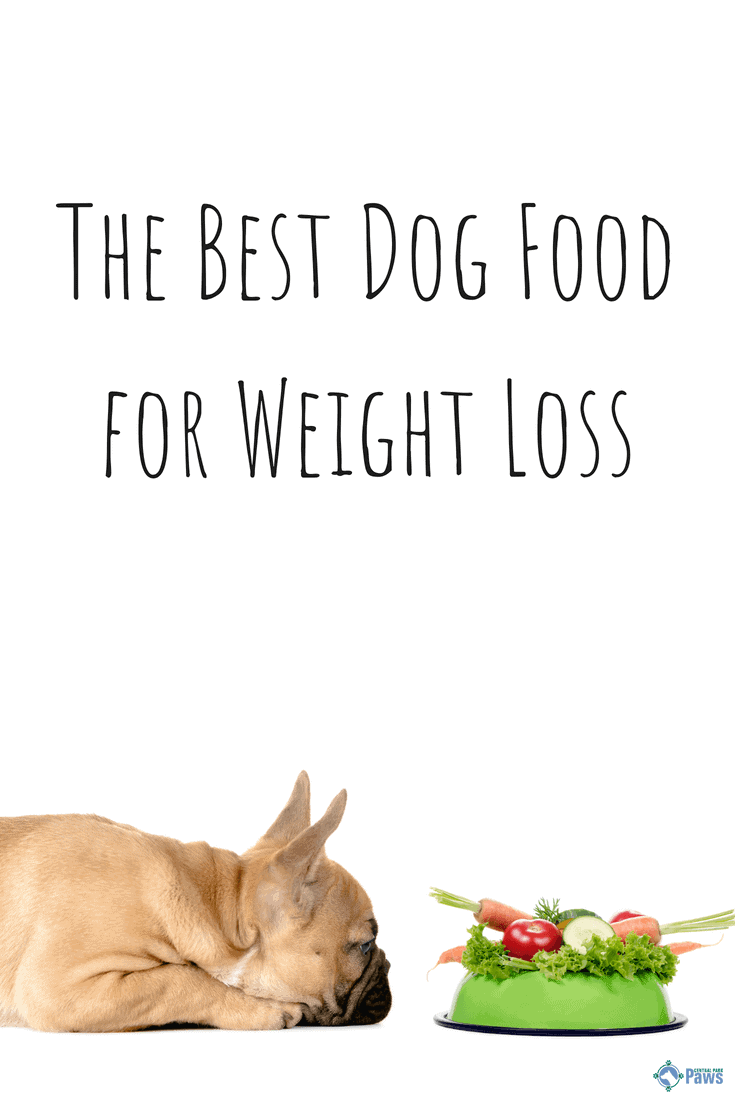 The Best for Weight Loss Dog Foods